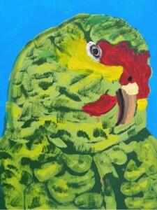 Colton's Parrot